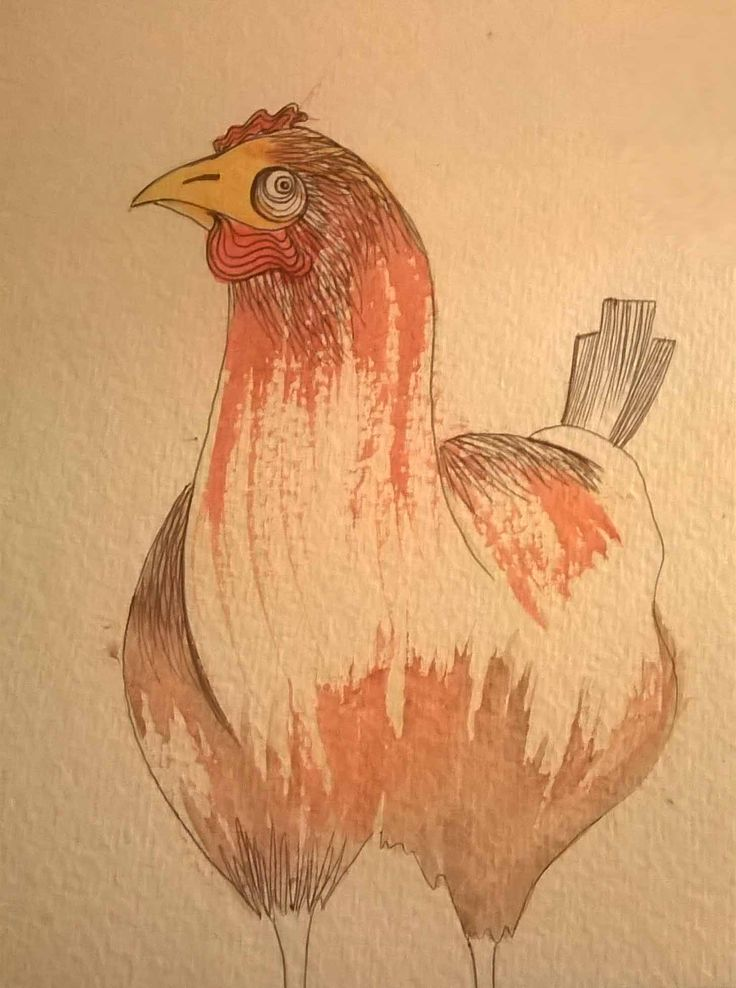 gallina biro e acquerello #animal #illustration by Teresa Mazzanti
