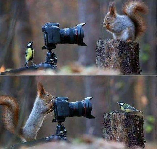 TOP 40 Animals Pictures | Funny Animals | DomPict.com
