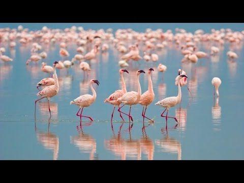 Bolivia's Salar De Uyuni & Chile's Wildlife Wonders in 4K   Nature Relax...https://au.pinterest.com/dezsip/4k-ultra-hd/
