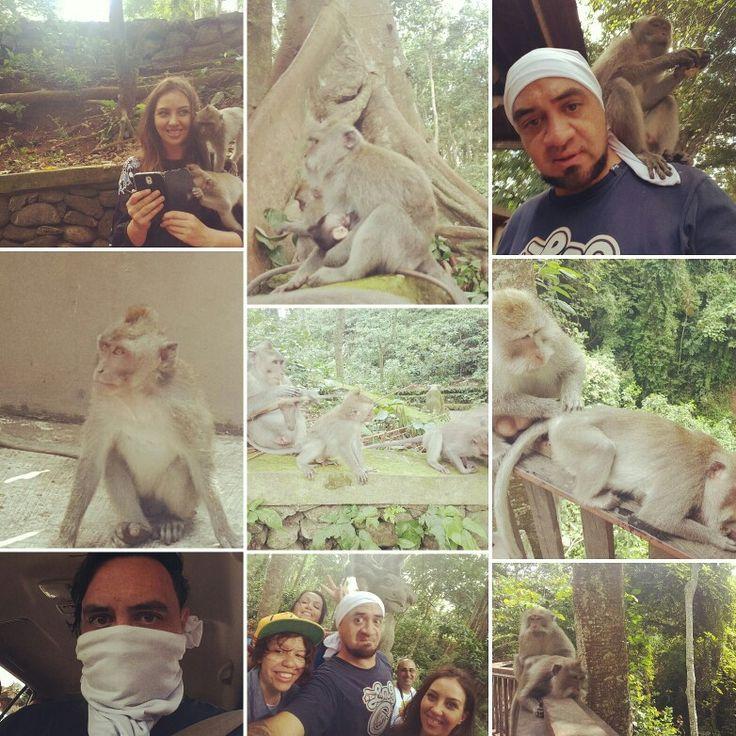 Monkey Time 2