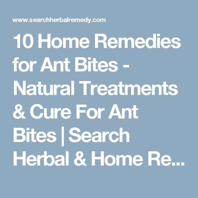 10 Home Remedies for Ant Bites - Natural Treatments & Cure For Ant Bites | Search Herbal & Home Remedy