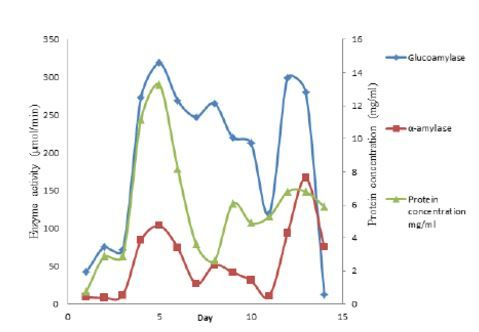 Effect of Divalent Metal Ions on Glucoamylase Activity of Glucoamylase Isolated from Aspergillus niger