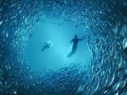Cañas de pescar | Pesca submarina | Todo sobre pesca: Pesca submarina