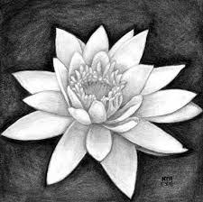 Цветок лотоса , рисунок карандашом
