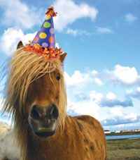 HORSE birthday party | Your Complete Store for Horse & Rider - The Bony Pony - Saddles, Tack ...