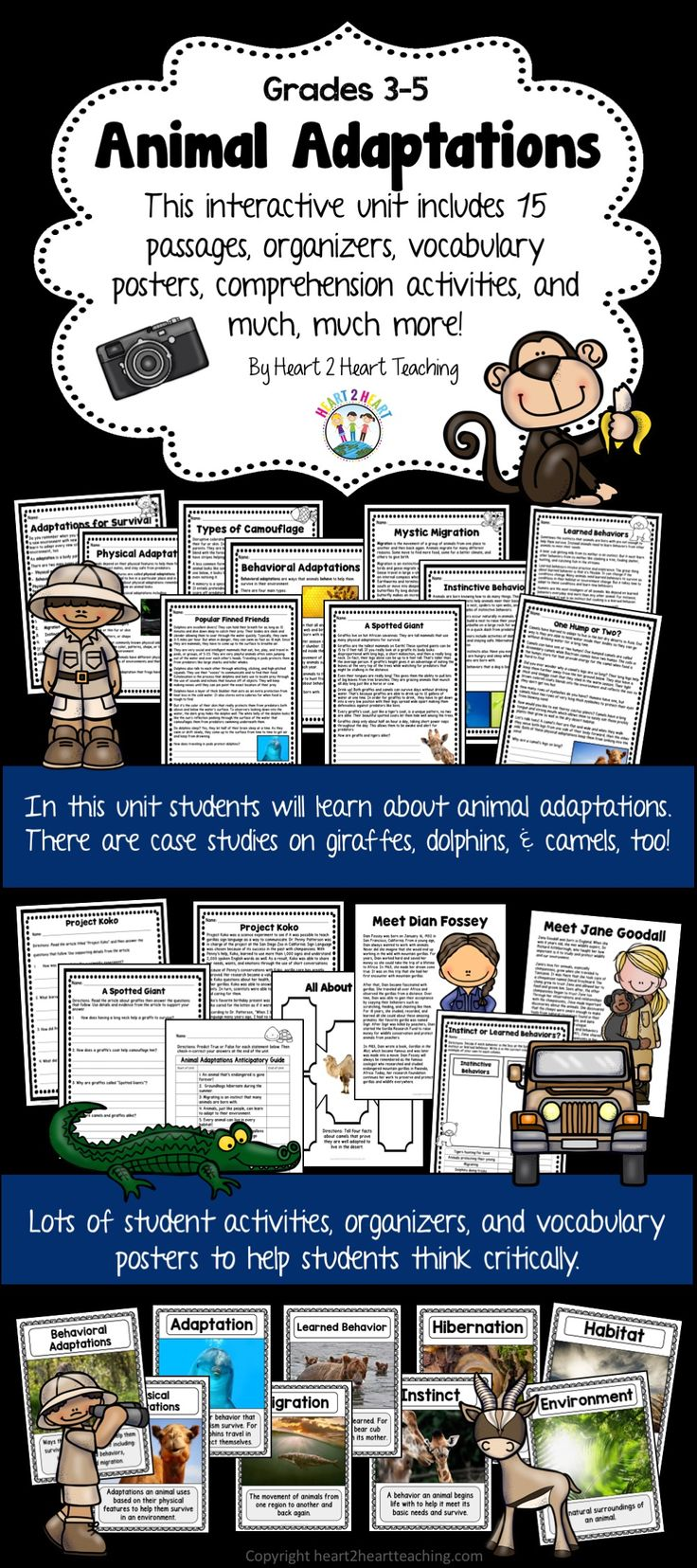 In this pack you'll find 15 passages, comprehension and connection activities, vocabulary posters, case studies on giraffes, camels, and dolphins, writing activities, and so much more! You will love this kid-friendly, interactive unit packed full of student-centered activities!