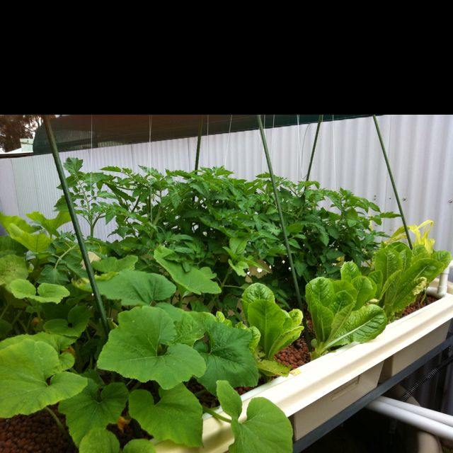 394 best aquaponics hydroponics images on pinterest for Hydroponic system with fish