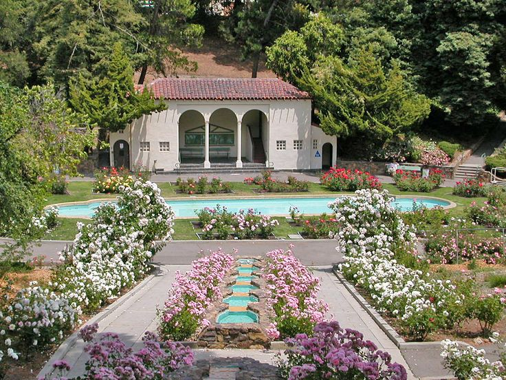 72 best Oakland, You Fox, You images on Pinterest | Fox, Foxes and ...