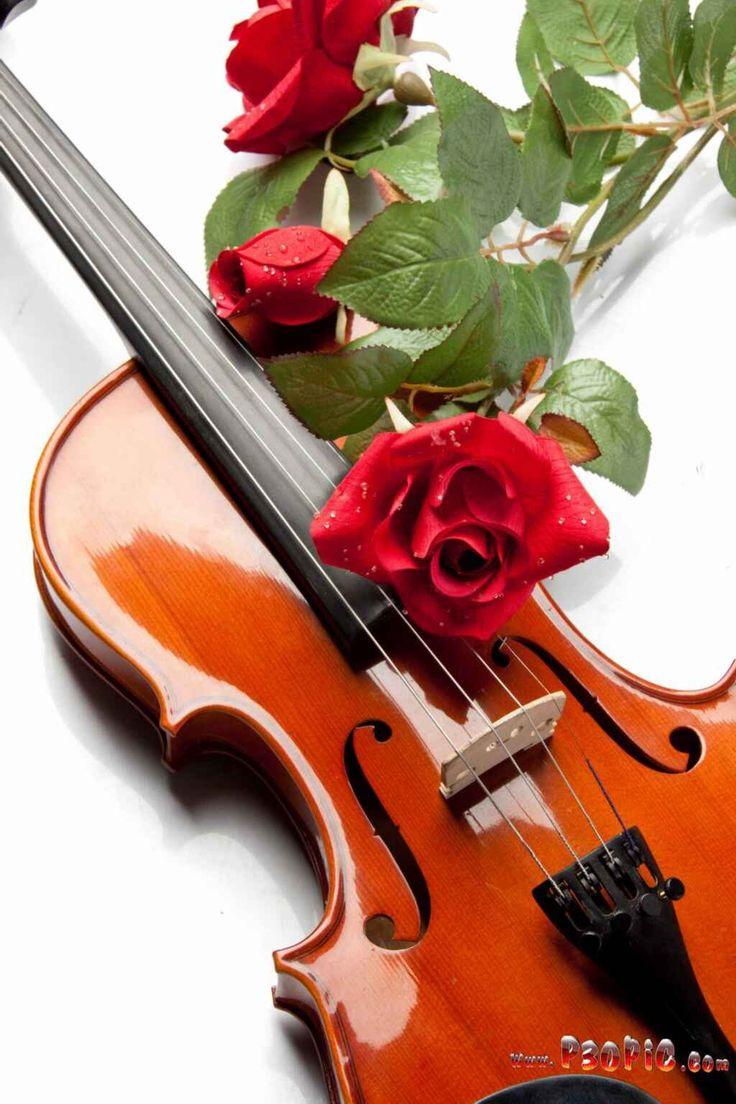 Надписями, скрипка и цветы открытка