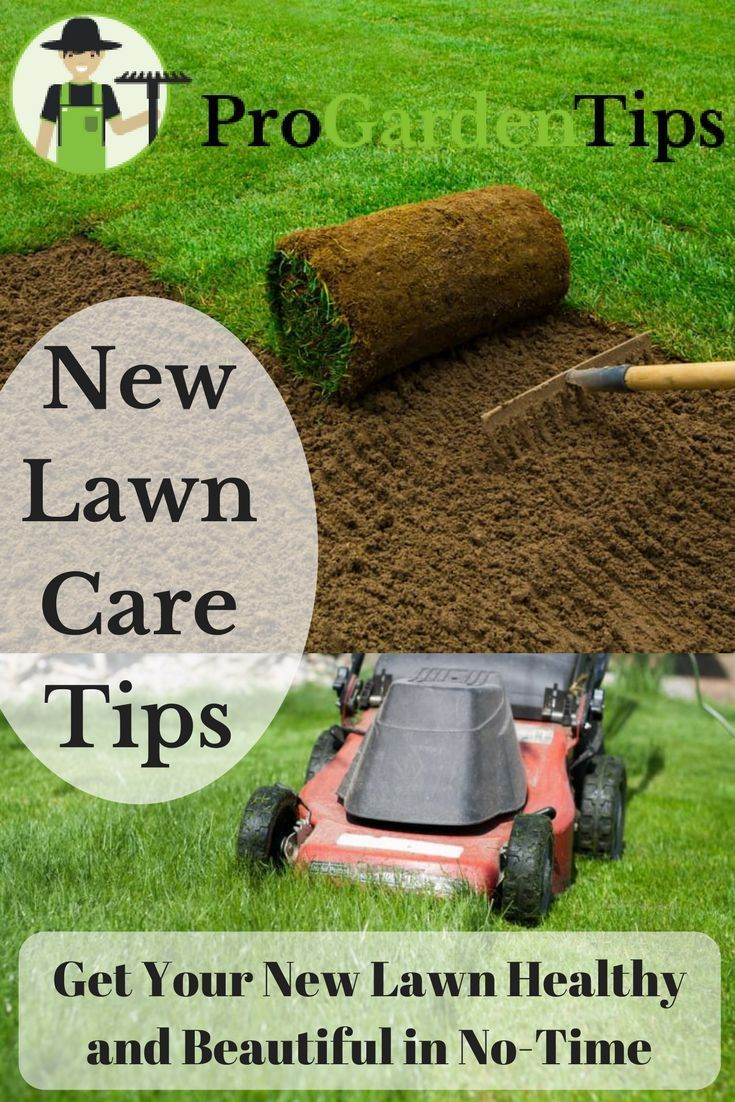 Should You Go For Seed Or Sod We Help You Choose And Give Some Tips To Help You Take Care Of Your New Lawn Lawn Care Lawn Care Tips Lawn Care