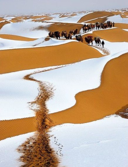 Winter snow, Sahara desert.