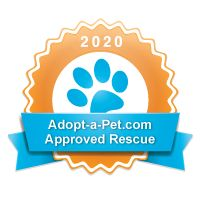 Dogs Available For Adoption Denver Co Non Profit In 2020 Dog Adoption Adoption Pitbull Rescue