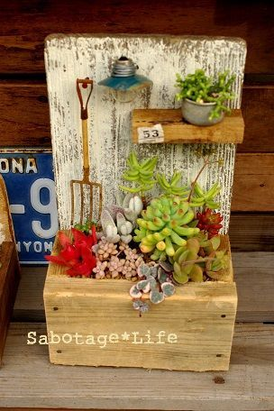 Cute succulent arrangement