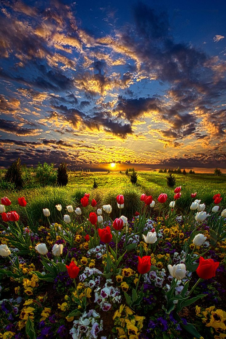 Peace i leave with you on pinterest discover the best for Beautiful flower landscapes