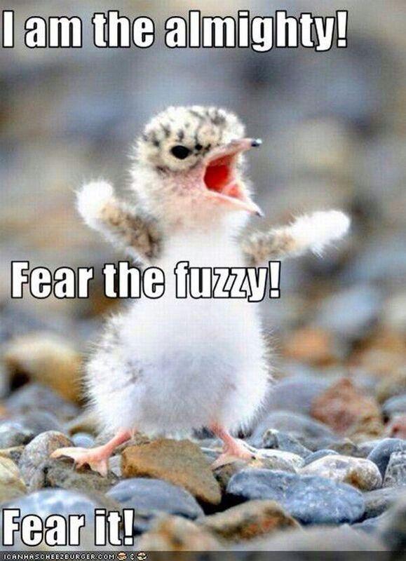Fear the fuzzy!!