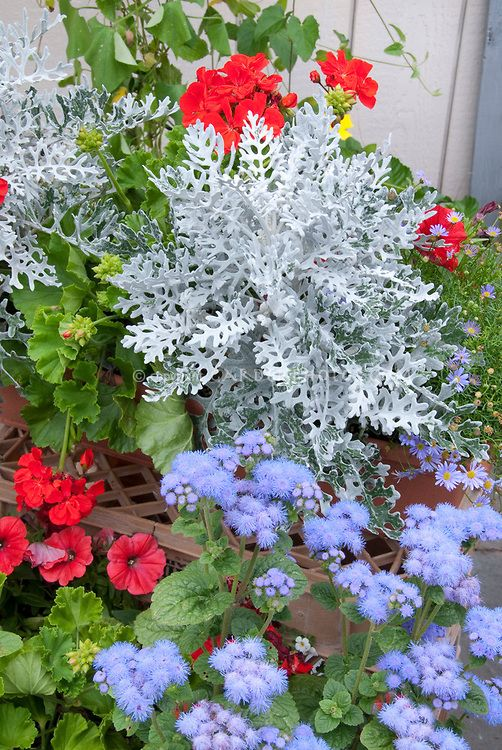 Patriotic Red, white and blue color theme garden of ...