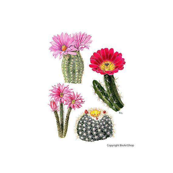 cactuses I.