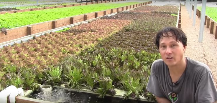 How A Sustainable Aquaponics Farm Grows 7000 Heads Of Lettuce A Week... - http://www.ecosnippets.com/gardening/aquaponics-farm-grows-7000-heads-of-lettuce/