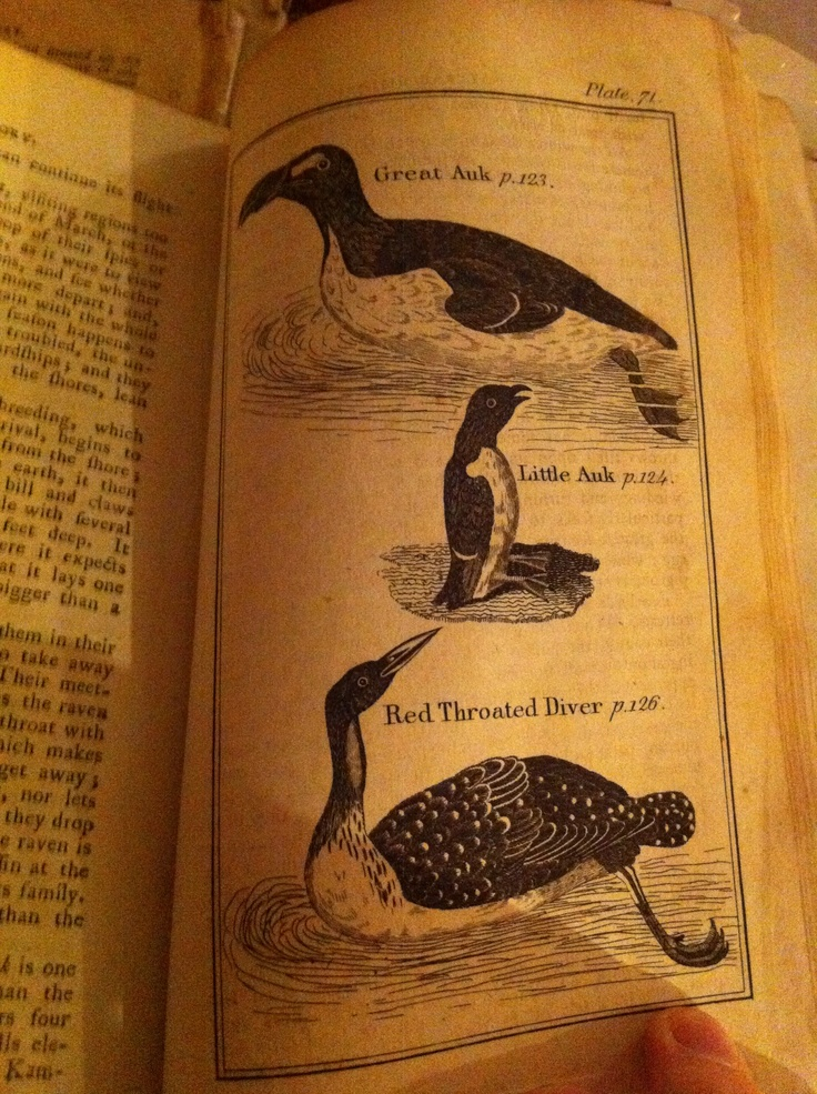 The Great Auk still alive and kicking when Buffon's Natural History was printed in 1792