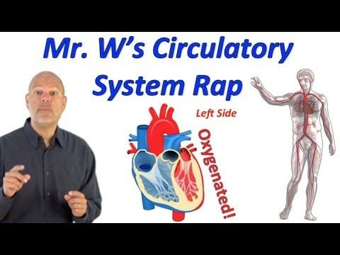 Circulatory System Rap (Pump it Up!) a number of science video's with this guy