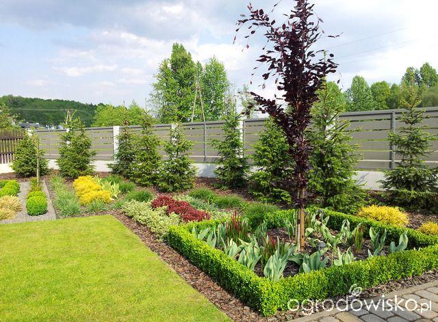 Moja codzienność - ogród Oli - strona 1446 - Forum ogrodnicze - Ogrodowisko