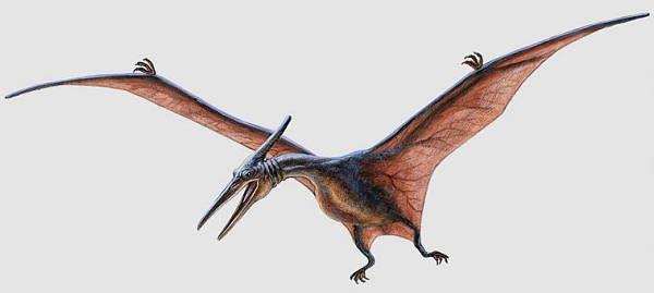 Diferentes Tipos De Dinosaurios Voladores Emotional Art Pterodactyl The Lost World Estos dinosaurios voladores tenían un diseño corporal justo para volar, su cuerpo era pequeño el pteranodon fue un dinosaurio volador que no poseía dientes. diferentes tipos de dinosaurios