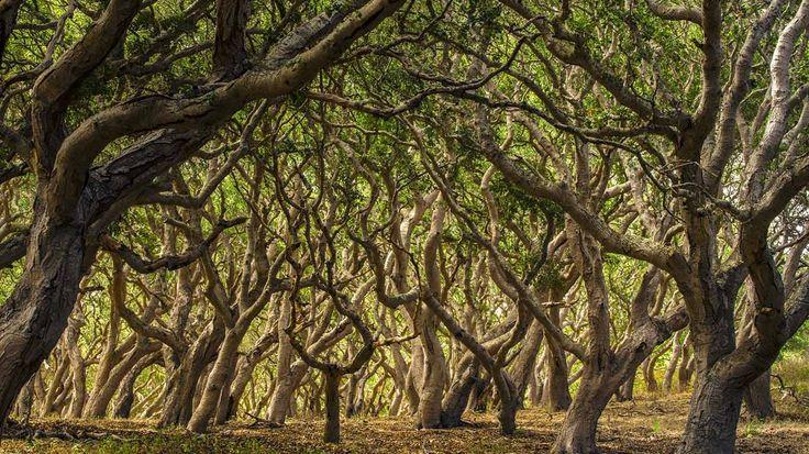Oak trees in Palo Corona Regional Park, Carmel Valley, California (© Doug Steakley/Getty Images)(Bing UK)