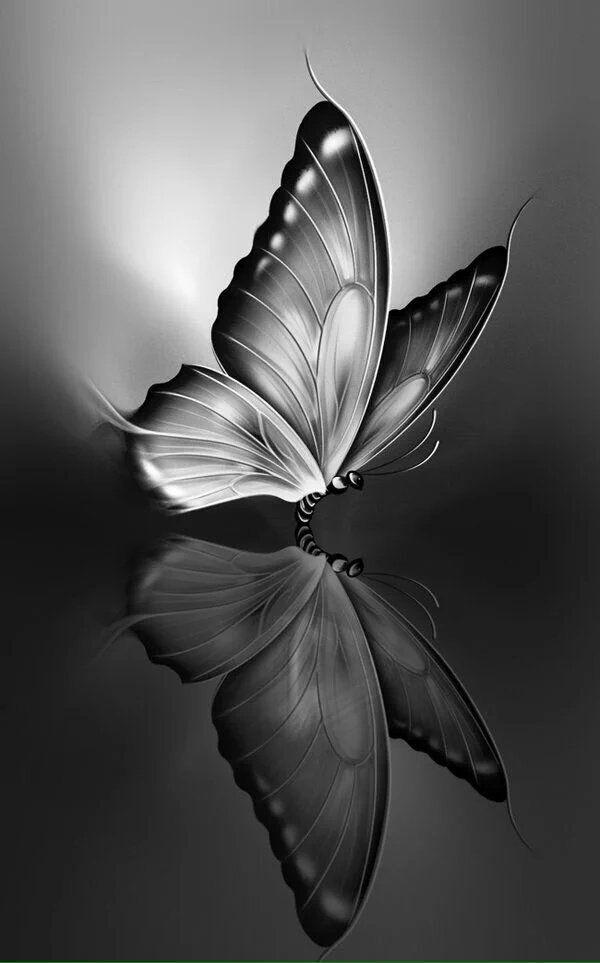 Czw5 Qtviaabszv Jpg Large 600 963 Pixeles Butterfly Wallpaper Backgrounds Dark Wallpaper Butterfly Wallpaper