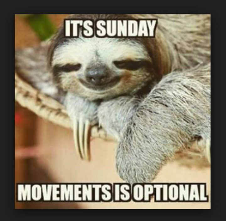 27 Funny Sunday Memes That Are Perfect for Lazy Sundays | Funny sunday memes, Sunday humor, Morning quotes funny