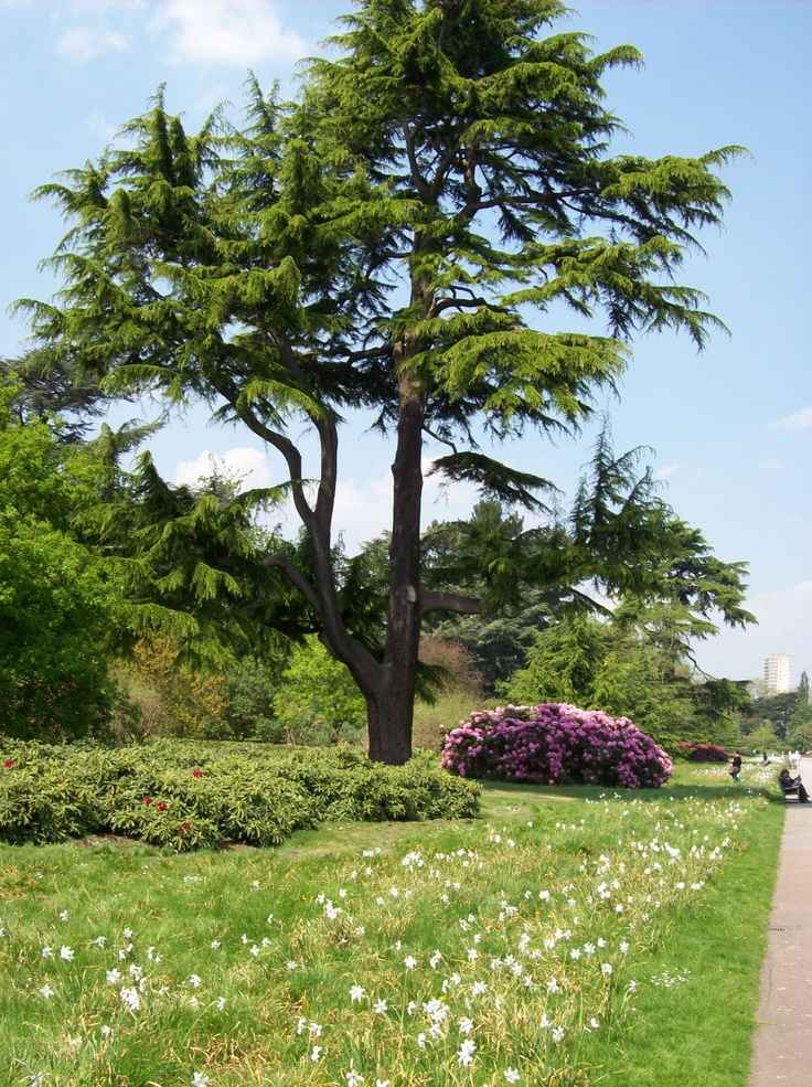 22 best images about royal botanic gardens kew england for Garden trees england