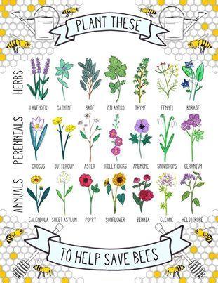 Bee-friendly herbs, perennials and annuals.