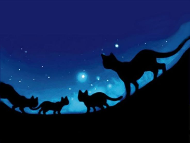 pictures of warrior cats | Warrior Cats of PantherClan! Moon Valley