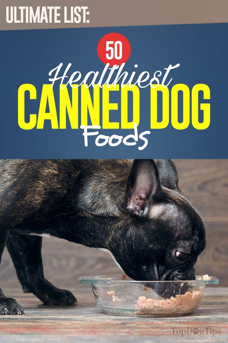 The 50 Best Canned Dog Foods Canned Dog Food Dog Food Recipes