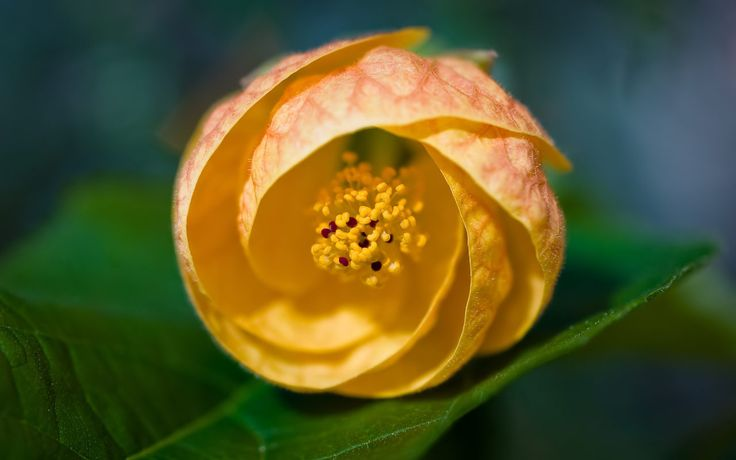 Macro Nature | Macro Nature Photography Wallpaper2
