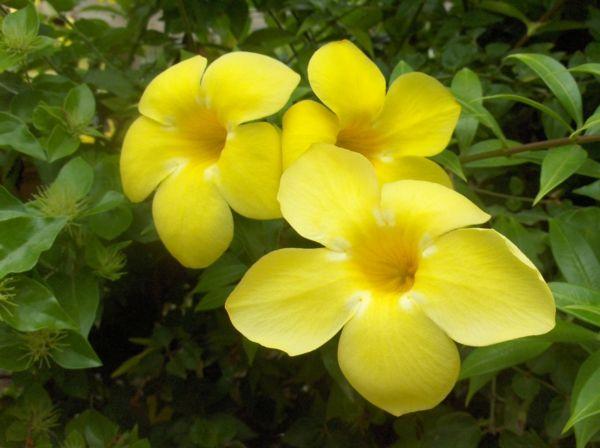 Die 25+ Besten Ideen Zu Exotische Pflanzen Auf Pinterest ... Garten Ideen Tropisch Exotisch Bilder