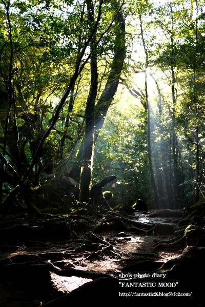 屋久島・自然/Yakushima Nature