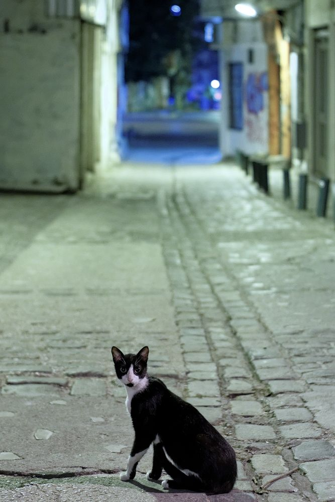 Γάτα στην Κωνσταντίνου Παλαιολόγου (Ιούλιος 2017)