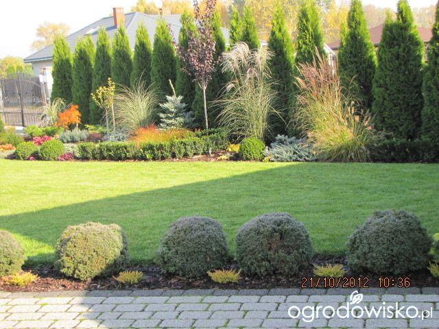 Ania z zielonego wzgórza :-) - strona 72 - Forum ogrodnicze - Ogrodowisko
