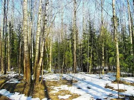лес весенний: 22 тыс изображений найдено в Яндекс.Картинках