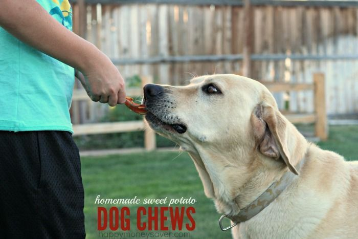 All you need to make homemade dog chews are some sweet potatoes or yams, slice them and bake until they are chewy. My dog loves his homemade dog chews.