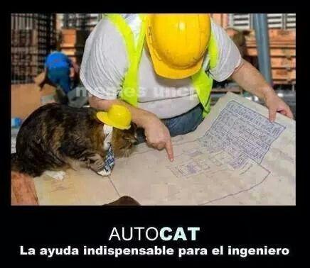 Auto Cat