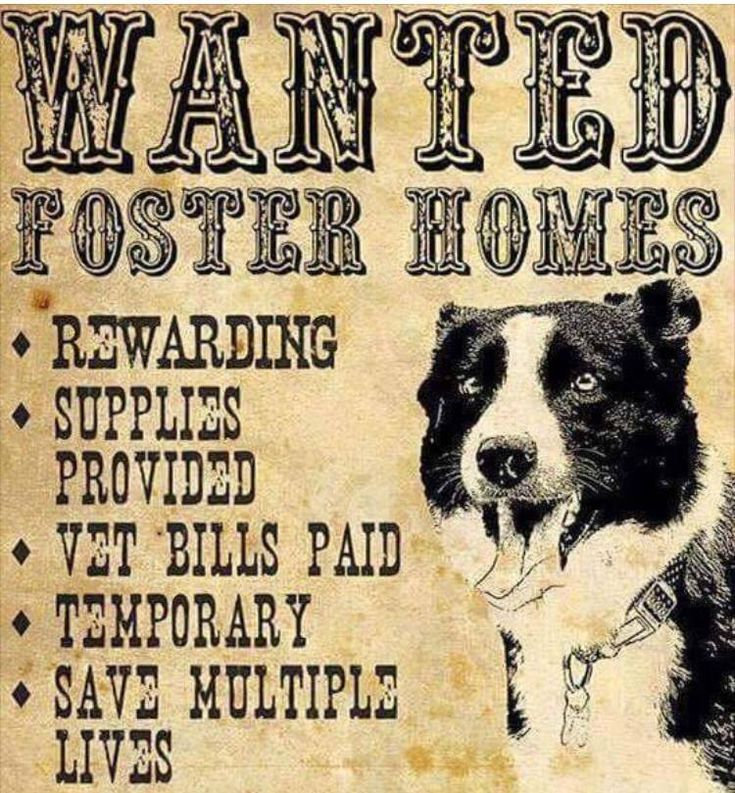 + TEXAS + URGENT: FOSTERS ARE DESPERATELY NEEDED, ideally we need fosters to be located in the South Texas area (San Antonio, Austin, Corpus Christi, Beeville, Alice, etc.). Fosters need to be in close enough proximity to be able to PICK UP YOUR FOSTER DOG! We have an URGENT need & without fosters DOGS DIE! CALL NOW- to be added to the South Texas Shelter Dogs FOSTER DATABASE! (410) 608-2195 https://www.facebook.com/Nueces-County-TX-Dogs-in-Need-of-Rescue-1606820082883903/photos_stream
