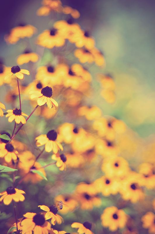 Golden flower picture, perfect for summer which is just around the corner...