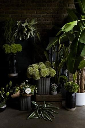 We're really excited about the latest additions to our faux range, They're lush, tropical, and sure to invigorate any interior - from sweet little foliage buds