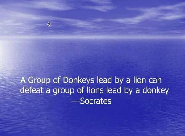 A group of donkeys led by a lion can defeat a group of lions led by a donkey #business #quotes
