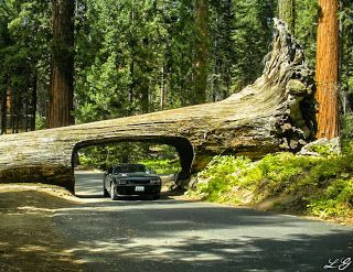 A bucket list must: Sequoia National Park!  Haven't been since I was really young and don't much remember it.