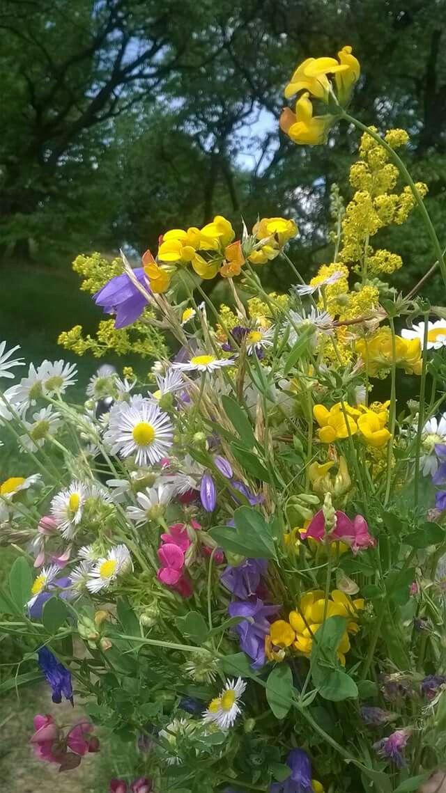 Flori de la munte!