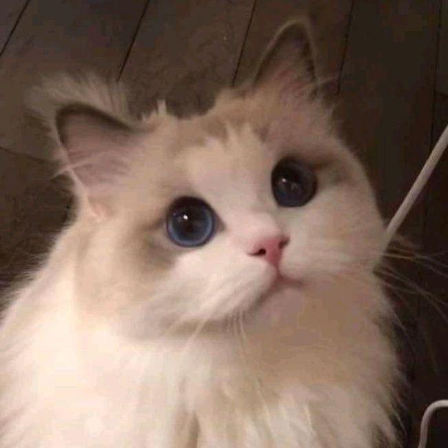 Paregood Tiktok In 2021 Cat Icon Attack On Titan Anime Mobile Legends