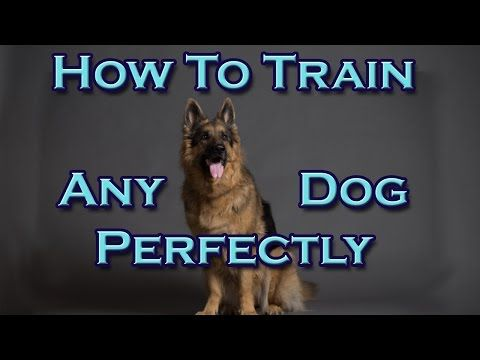 How To Train Any Dog Perfectly! - YouTube