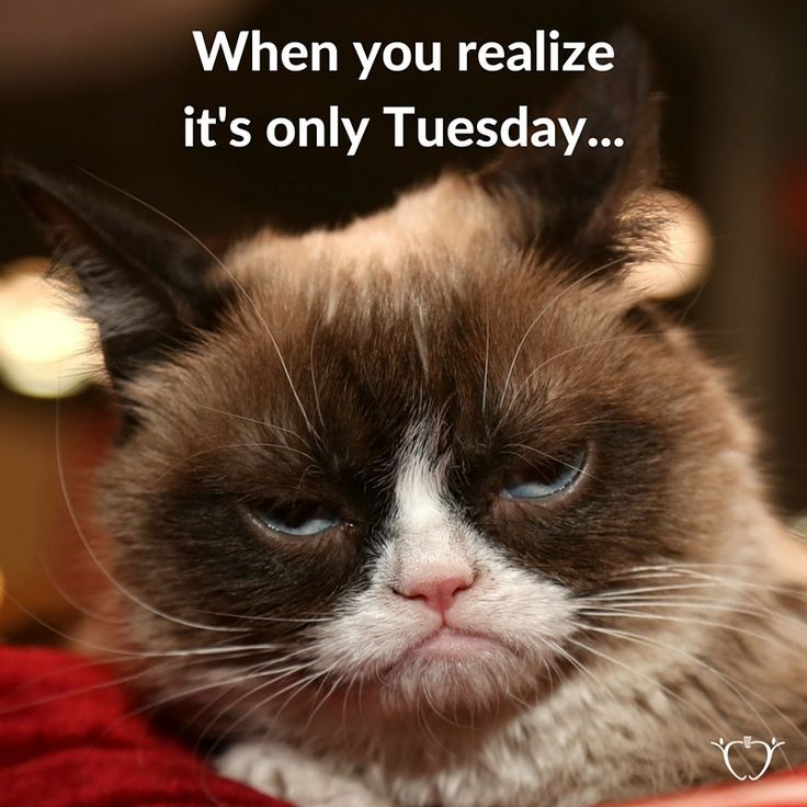 WAIT, IT'S ONLY TUESDAY?!